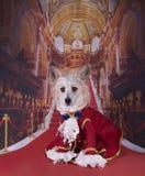Chinese Kuif in het Hertogkostuum Royalty-vrije Stock Afbeelding