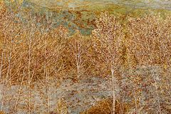 Lacquer painting birch forest, adobe rgb. Chinese lacquer painting is a painting based on natural lacquer. It is both art, but also practical decorations. Some Stock Image