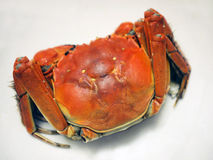 Chinese lake crab. The steamed chinese lake crab Royalty Free Stock Image