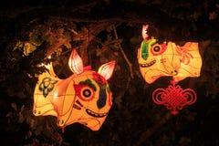 Chinese lantaarns in de vorm van gestileerde varkens royalty-vrije stock fotografie