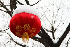 Chinese lantern. Red chinese lantern handing in the tree Stock Photos