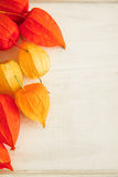 Chinese lantern blossoms Stock Images