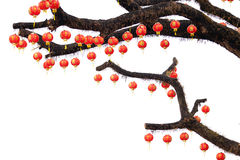 Chinese lantern on branches Royalty Free Stock Photos