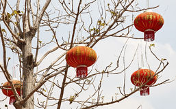 Chinese lantern. Decoration on the tree, Chinese means good luck royalty free stock photography