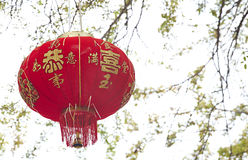 Chinese lantern. Decoration on the tree, Chinese means good luck stock image