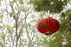 Chinese lantern. Decoration on the tree, Chinese means good luck stock photos