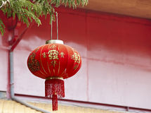Chinese lantern. Decoration on the tree, Chinese means good luck royalty free stock photos