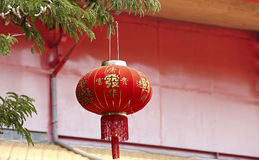 Chinese lantern. Decoration on the tree, Chinese means good luck stock photo