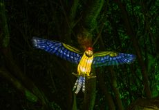 Chinese Lantern: Macaw Parrot stock images