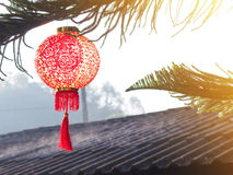 Chinese lantern on pine tree over roof. Chinese New Year backgro. Close up Chinese lantern on pine tree over roof. Chinese New Year background Royalty Free Stock Photos