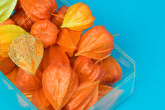 Chinese Lantern Pods Royalty Free Stock Photos