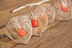 Chinese Lantern Still Life Stock Images