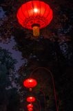 Chinese lanterns in Lazienki Park Royalty Free Stock Photography