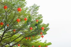 Chinese lanterns during new year festival Stock Photography