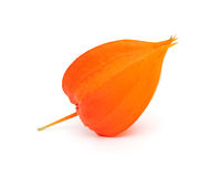 Chinese Lanterns, Physalis alkekengi Stock Photos