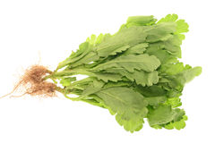 Chinese Lettuce Royalty Free Stock Photos