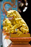 Chinese lion Royalty Free Stock Photos
