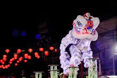 Chinese lion costume dance during Chinese New Year celebration royalty free stock images