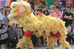 Chinese Lion Dance Royalty Free Stock Photography