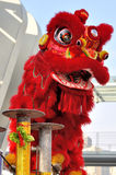 Chinese lion dance in traditional style Royalty Free Stock Photography