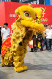 Chinese lion dancing Stock Image