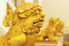 Chinese lion statue. In temple Royalty Free Stock Images