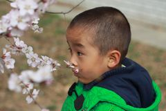 A Chinese little boy smelling flowers Royalty Free Stock Image