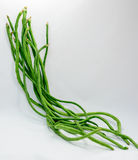 Chinese Long Beans on White Background. Raw Chinese Long Beans on a White Background Royalty Free Stock Image