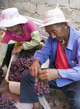 Chinese Man Cleaning Grape Harvest. Chinese farmers sort through bunches of grapes, picking out bad grapes and boxing them up for delivery to market Stock Image