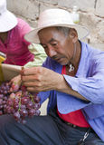 Chinese Man Examining Grape Harvest. Chinese farmers sort through bunches of grapes, picking out bad grapes and boxing them up for delivery to market Royalty Free Stock Photos