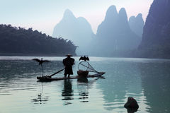 Chinese man fishing with cormorants birds Stock Photos