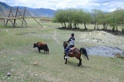 Chinese man on horse. Near Shangri-La ,Yunnan ,China royalty free stock photo