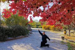 Autumnal shadowboxing royalty free stock photos