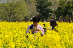 Chinese Man among yellow flowers Stock Image