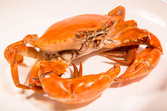 Chinese meat -Marinated crabs. China traditional dishes -Marinated crabs Royalty Free Stock Photography