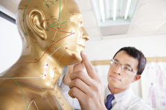 Chinese medicine doctor teaching  Acupoint Royalty Free Stock Photo