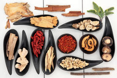 Chinese Medicine. Traditional chinese herbal medicine ingredient selection royalty free stock photo