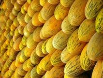 Chinese melon Stock Photo
