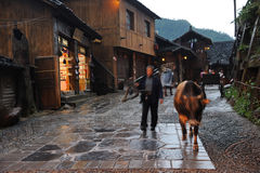 Chinese Miao nationality farmer with buffalo Stock Image