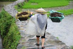 Chinese Miao nationality farmer in the rain Royalty Free Stock Image