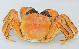 Chinese Mitten Crab. Cooked Chinese Mitten Crab, a famous delicacy in Shanghai cuisine and is prized for the female crab roe stock photography