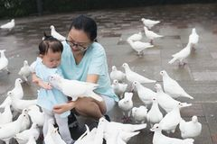 Chinese mom encourage little daughter feed pigeons stock image