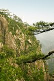 Chinese mountain: pine trees and steep cliff Royalty Free Stock Image
