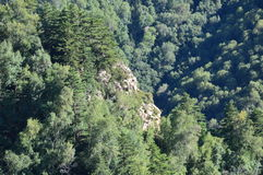 Chinese mountain with trees stock images
