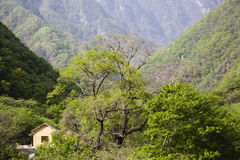 Chinese Mountain View with Small Shack Royalty Free Stock Image