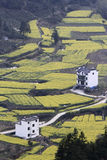 Chinese mountain village with rapeseed flower blossom Royalty Free Stock Photo