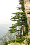 Chinese mountains, pine tree and the mountain Royalty Free Stock Image