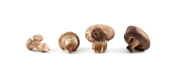Chinese mushroom Stock Images