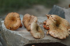Chinese Mushrooms Stock Photography