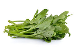 Chinese mustard green on white background (Nontoxic) Royalty Free Stock Images